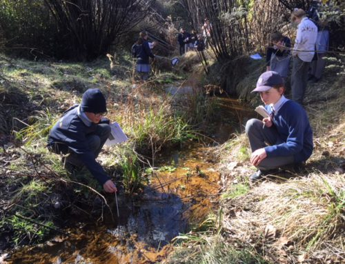 SMGS Science Students Working to Discover Habitats for Endangered Frogs