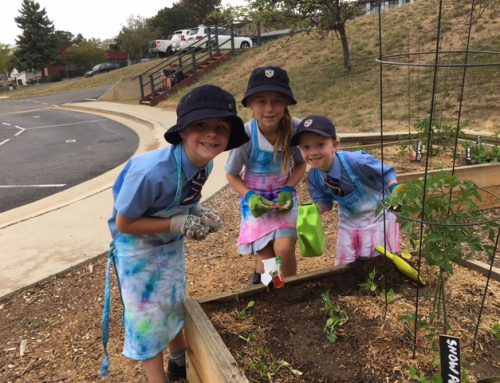 New outdoor spaces help our students' green thumbs bloom