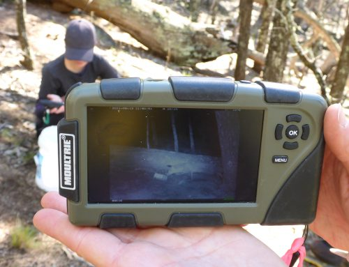 Environment Club – Checking Cameras for spotted-tailed quolls with the National Parks and Wildlife Service